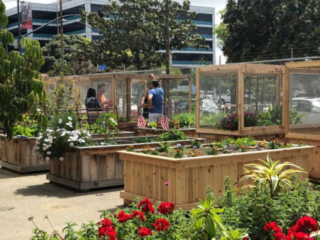 smarts-farm-plots-4